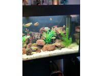 Jewel 180ltr fish tank with black cabinet plus accessories