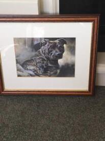 STAFFORDSHIRE BULL TERRIER STAFFY PICTURE IN FRAME
