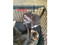 Kittens looking for new home