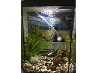 25 litres fish tank