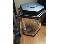 Hexagonal Shape fish tank