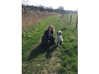 Walkies St. Neots Dog Walking and Sitting Service