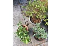 Selection of outdoor plants in pots