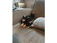 Twin boy cats