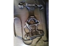 Black Cat/Small dog harness and lead