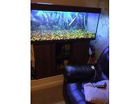 Fish tank 4ft juwel Rio 240 tank with cabinet £195