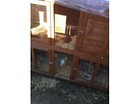 Bluebell two floor rabbit hutch