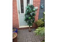 6 ft Tall Artificial Plant in Pot ideal for Office or Reception area