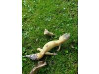 Leopard geckos and tank for sale