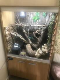 Veiled Chameleon With Vivarium