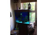 juwel lido200 fish tank (only 6 months old)