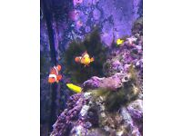 Marine aquarium £300