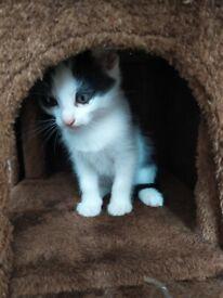 Friendly kitten for sale
