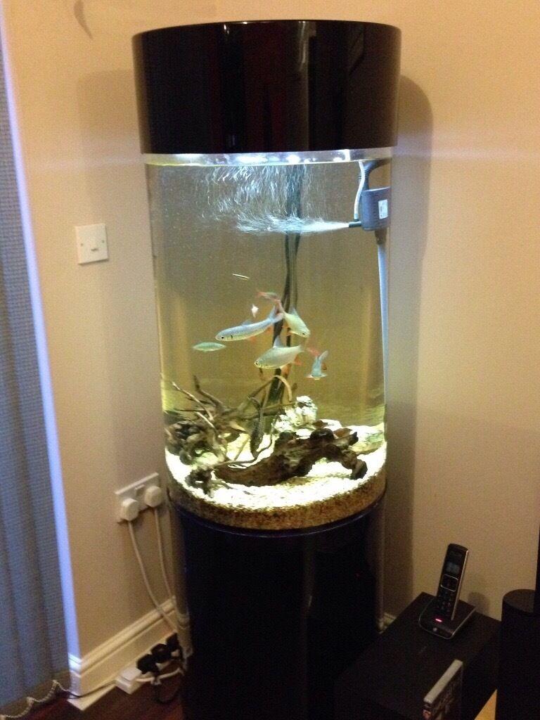 Acrylic tower column aquarium fish tank 1000 aquarium ideas for Column fish tank