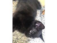 Cheap Cute kittens for sale..