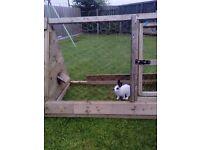 Rabbit an run