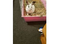 Rabbit for new home FREE