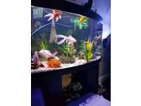 Bow faced fish tank