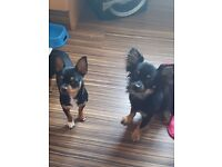 Milo and Millie for sale