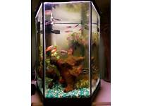 Fish tank, whole setup including fish