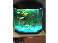 Cold water fish tank complete with fish 25 Litre Aquarium Black