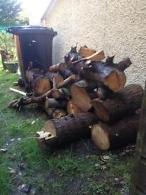 Logs. Firewood