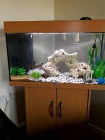 125l fish tank newtownabbey