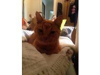 Missing Barney ginger cat Rye Avenue NR3 2QE