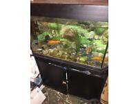 Jewel aquarium fish tank and fluval external filter