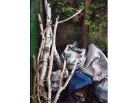 Free fire wood, silver birch recently taken down