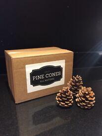 |1KG BOX~55 PINE CONES CRAFT CRHISTMAS DECORATION FLORIST WREATHS TREE