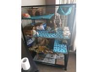 Parrot/ chinchilla/ degu/ rat Cage