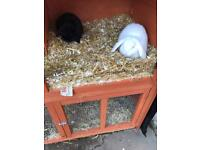 2' Mini Flop Rabbits, includes everything needed.