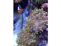 Juwel rio 125 the latest model marine tropical cold water fish tank with setup (delivery)