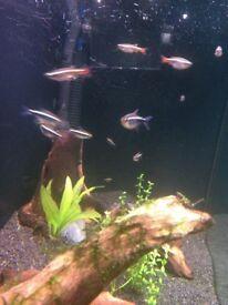 Small fish tank wanted