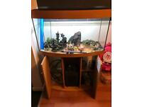 Juwel 180 Aquarium fish tank