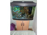 Aquarium Fish Tank Tropical Coldwater 62L
