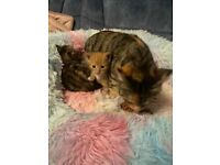 Two beautiful kittens looking for a forever home