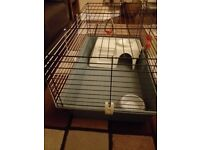 Ferplast Guinea Pig cage with accessories