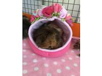 Guinea pig/rat small animal bed
