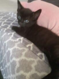 Kittens 7weeks