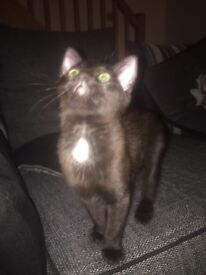 Playful 6 month old male cat