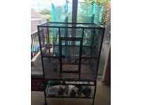 Metal cage with stand - plus 4 birds(2-zebra finch,2-canaries)