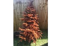 FREE Christmas tree/Fire wood