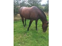 For Loan 17.2hh