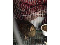 Bird for sale