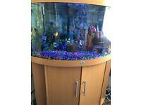 Juwel corner fish tank £250 no offers please REDUCED PRICE