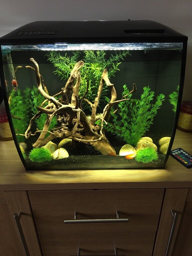 Fluval flex 57 fish tank full set up fully cycled for Tetra pond filter setup