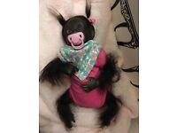 Reborn baby chimp