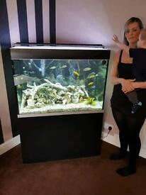 Fluval 300litre cichlid full set up aquarium fish tank